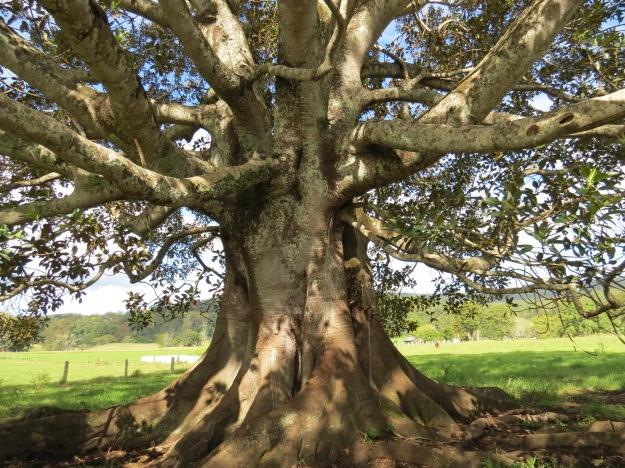 Prayer Tree_2222